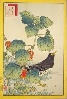 生写四十八鷹 黒つぐみ ほうづき 嵩岳堂 1859年 yajifun貼交帳