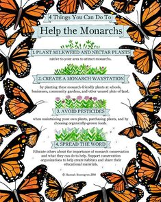 butterfly garden Plant lots of milkweed. I - garden Butterfly Garden Plants, Butterfly Feeder, Butterfly House, Butterfly Flowers, Butterfly Food, Butterfly Quotes, Flying Flowers, Hummingbird Garden, Hummingbird Food