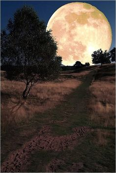Weg zum Mond by Helmut Adler [the moon isn't that big or close to earth. though it would be pretty if it was] Moon Shadow, Moon Photos, Moon Pictures, Beautiful Moon, Beautiful World, Sombra Lunar, Moon Dance, Shoot The Moon, Good Night Moon