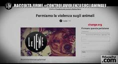 La iena Nina ancora una volta #controlaviolenzasuglianimali FIRMATE E CD LA PETIZIONE #CONTROLAVIOLENZASUGLIANIMALI #Iloveanimals #Ilovepets #leiene #FbSocialPet