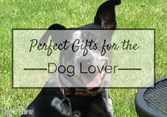 Perfect Gifts for the Dog Lover