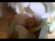 Kitty in a bassinet - YouTube