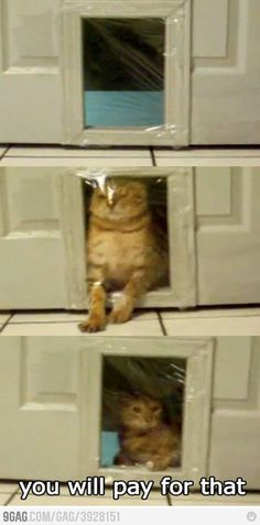 This is exactly the chuckle I needed tonight. Poor cat. I bet you he got his owners back bad!