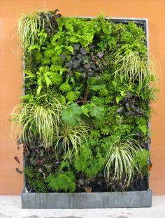 Vegetal Walls For The Home From Jardins De Babylone Montreuil Vertical Garden Plants, Vertical Garden Design, Patio Plants, Indoor Plants, Vertical Gardens, Small Gardens, Outdoor Gardens, Tiered Garden, Love Garden