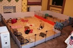 guinea pig cages | Reply With Quote