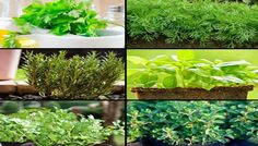 be healthy-page: 7 Herbs That Belong in Every Kitchen