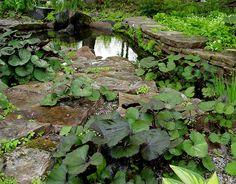 Hosta, sweet woodruff, ligularia and creeping hydrangea for wet soil/ shade. Garden Pond, Water Garden, Sweet Woodruff, Pond Ideas, Outdoor Play, Hydrangea, Planting, Perennials, Wild Flowers