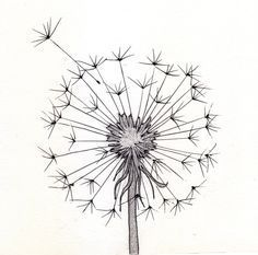 line drawing dandelion | Go Back > Pics For > Cute Pencil Drawings Tumblr: