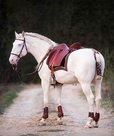 """PSL Stallion, Champan """"Misha"""" Photography: Anna Volodicheva"""