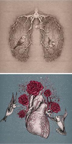 órganos ilustrados
