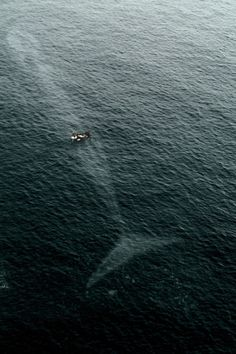 abunayyan26:  You're never alone in the ocean !  -