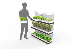 Future Tech Farm modular personal home grow system. Indoor Greenhouse, Greenhouse Gardening, Hydroponic Gardening, Aquaponics, Indoor Garden, Indoor Plants, Verticle Garden, Indoor Farming, Green Farm