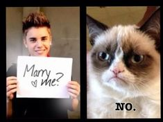 grumpy cat, justin bieber, marry me
