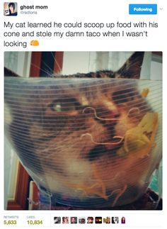 This cat making the best of a bad situation. | 22 Tweets That Will Make You Love Cats Even More Than You Do Already