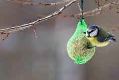 Bird Supplies Motivated Casetta Nido Uccellini Di Legno Giardino Volatili Passeri Migratori Pet Supplies