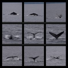 Whale tails on an Alaska cruise