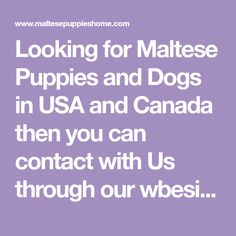 Looking for Maltese Puppies and Dogs in USA and Canada then you can contact with Us through our wbesite. Maltese Dog For Sale, Maltese Dogs, Bag Patterns To Sew, Pet Names, Canada, Messages, Usa, Names Of Animals, Maltese