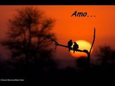Corujas e Vento Forte (Amo) - vídeo poema  romântico - Me Morte/MPadilha