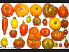 ¿Qué tipo de tomate es más sabroso?