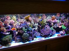 Coral Reef Aquarium - I really miss my saltwater aquarium.