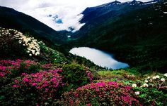 Explore #Nujiang of #Yunnan for the alpine lake named Tingming where alpine flora flourishes. #adventure #nature
