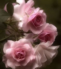 ImageFind images and videos about pink, flowers and rose on We Heart It - the app to get lost in what you love. Love Rose, Pretty Flowers, Pretty In Pink, Pink Flowers, Lavender Roses, Pink Petals, Blush Roses, Bouquet, Colorful Roses