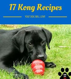 17 Different Kong Recipes That Your Dog Will Absolutely Love www.longlivedog.c...