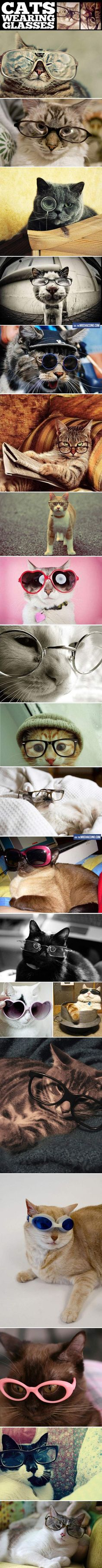Cats wearing glasses. << Kitties are just too, too cute! --- Want a cat in your life? Come see all the adoptable #cats at the Humane Society of Fremont County! We're located in Canon City, Colorado. www.canoncityhumanesociety.org