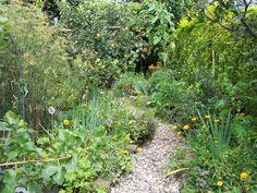 zalig, een beetje privacy en het waanidee dat het hier niet allemaal plat en rechtdoor kijken is My Secret Garden, Garden Yard Ideas, Country Cottage Garden, Plants, Garden Paths, Urban Garden, Dream Garden, Farm Gardens, Small Urban Garden