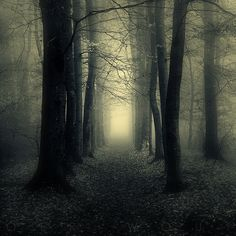 The perfect forest