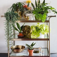 From cacti to florals, perennials and herbs ... I love them all! In addition to my succulent collection, I have a sweet little herb garden growing on my kitchen window sill. There's nothing better than...