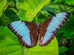 Costa Rica's butterfly species make up approximately 90% of all Central American butterflies, 66% of neo-tropical butterflies and 18% of the world's total butterfly species.