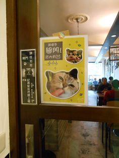 Taipei Cat Cafe blog