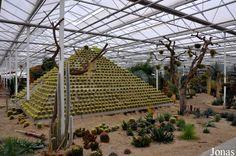 Parque de la Familia Cactus Oase, Ruurlo, Holanda https://www.facebook.com/media/set/?set=a.10204648247538842.1073743968.1014978408&type=1&l=1e33217f5d