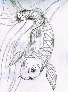 Image from http://pulpbits.net/wp-content/uploads/2014/03/sketch-koi-fish.jpg.