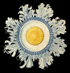 Ernst Haeckel I think this is painted but wouldn't it be a good source for stitch work