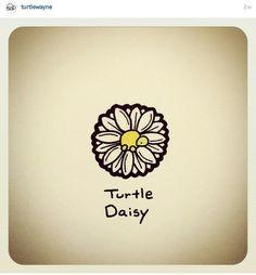 Turtle daisy