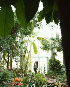 10.2 тыс. отметок «Нравится», 38 комментариев — Urban Jungle Bloggers™ (@urbanjungleblog) в Instagram: «Enjoy more greens in your local botanical garden! 🌴🌿🌵🍀🌱  📷:@charlie_burr_ #urbanjunglebloggers»