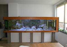 . Amphibians, Reptiles, Paludarium, Fish Tanks, Gone Fishing, Nice Place, Aquascaping, Aquarium Fish, Studio