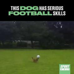 BREAKING: Manchester United offer £50 million for David De Dog.