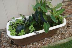 Got an old bathtub - make a water garden  http://www.hometalk.com/471860/container-water-gardens/photo/89403#!/471860