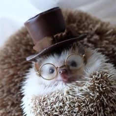 94541c359 Animals that I love · Hedgehog wearing a top hat and glasses.