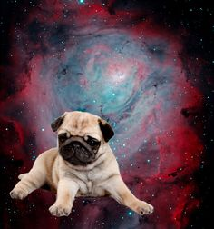 Dogs in Space by Topherchris