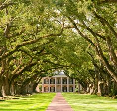 Pecan Trees Path Landscaping