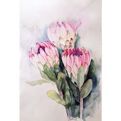 Protea in Aquarell auf Behance - Watercolor Projects, Watercolor Cards, Watercolor Illustration, Watercolor Flowers, Watercolor Paintings, Watercolors, Floral Paintings, Flor Protea, Protea Art