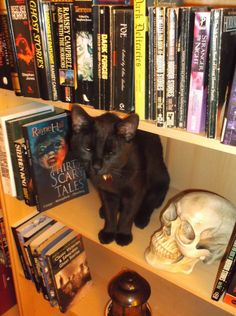 Here's my cat Sulu when he was 10 month old kitten, already developing an interest in horror books.