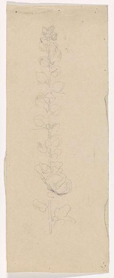 Stokroos, Antoon Derkinderen, 1869 - 1925