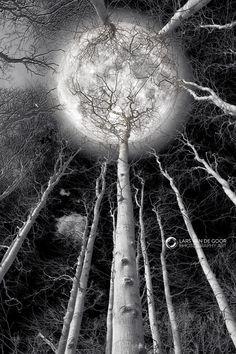 Holding the Moon by LarsVanDeGoor