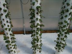How to grow strawberries vertically with a PVC pipe support system. The instructions on this site are well-written. No heating/re-molding of the PVC pipe is required.   PVC pipe can be painted. Lightly sand the pipe, paint with primer (Kiltz or Zinsser 1-2-3) to cover up any writing on the pipe and seal it, the spray with plastic spraypaint (Krylon Fusion).