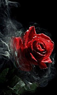 Rose Smoking..2014+-+1+%2817%29.gif (240×400)